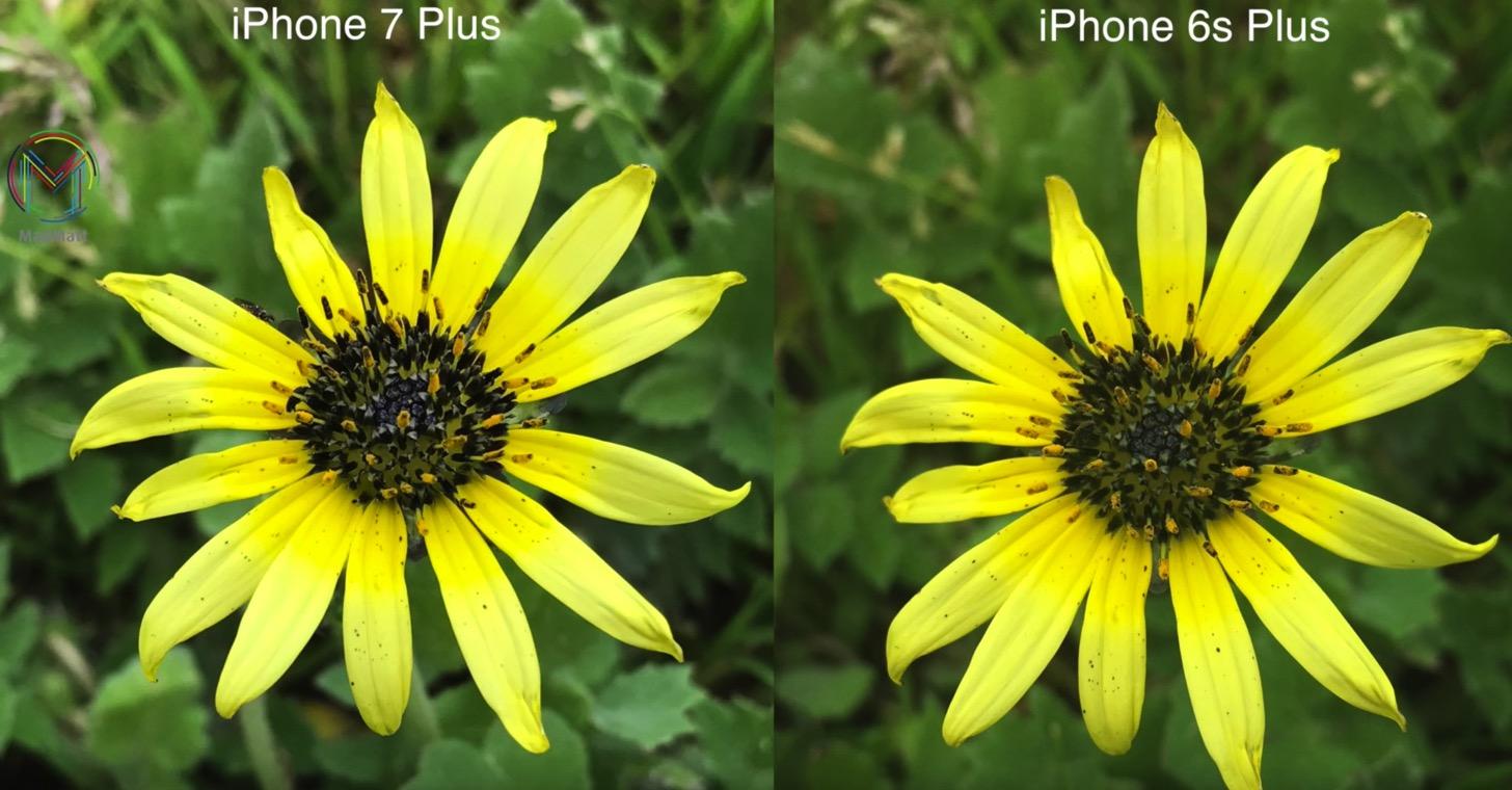 iPhone 7 PlusとiPhone 6sで撮った花の写真の差。