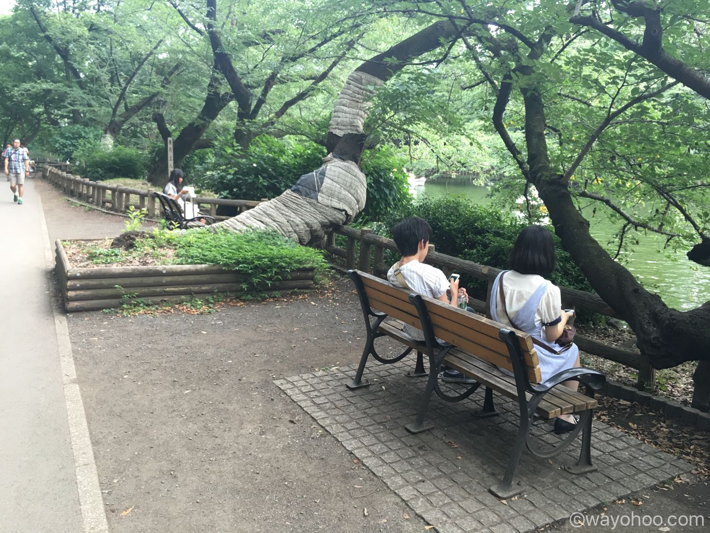 井の頭公園のベンチ