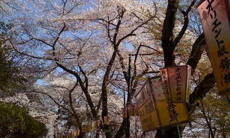 近所の公園の桜が綺麗だったのでiPhoneで写真をとってきました!