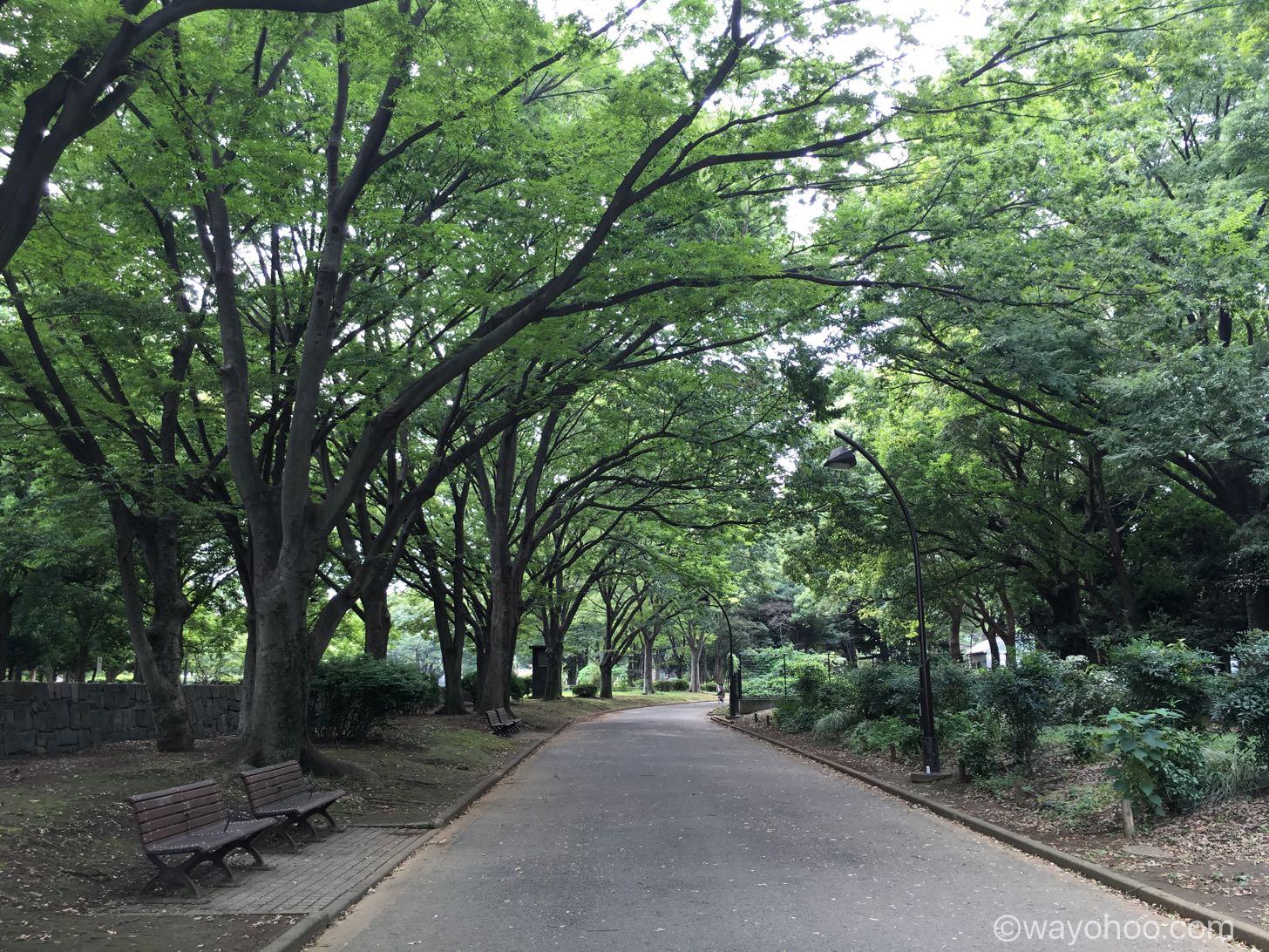 駒沢オリンピック公園の綺麗な木々