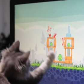 【動画】アングリーバードにハマる猫が可愛すぎる件 ( ;´Д`)ハァハァ