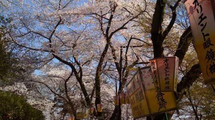 近所の公園の桜が綺麗だったのでiPhoneで写真とってきました。