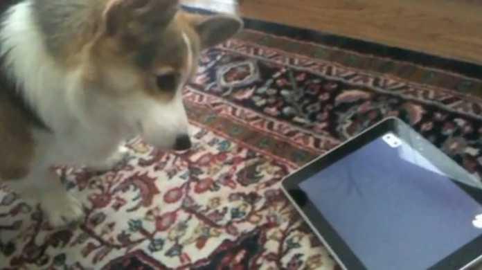 お犬は iPad はお嫌い!? iPad の前に首をかしげる可愛いらしいムービー。