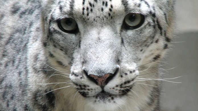 Mac OS X Snow Leopardをクリーンインストールする方法。