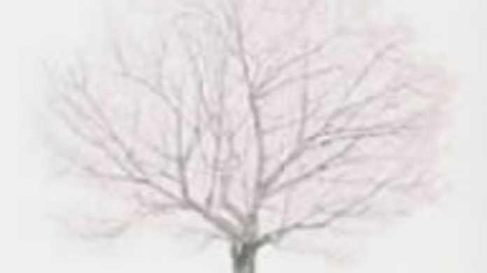 桜 - コブクロの歌詞と試聴レビュー